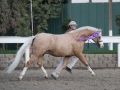 signature_trot_1_bs