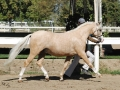 signature_trot_an_2_small
